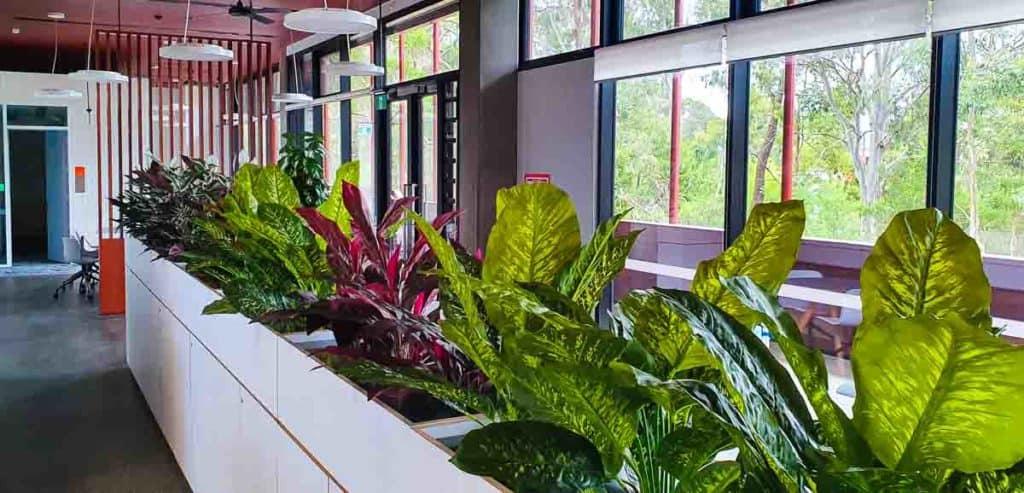 Artificial Plants at Charles Sturt University