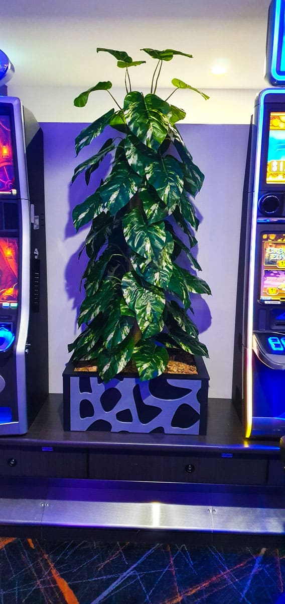Artificial Plants at Park Beach Bowling Club