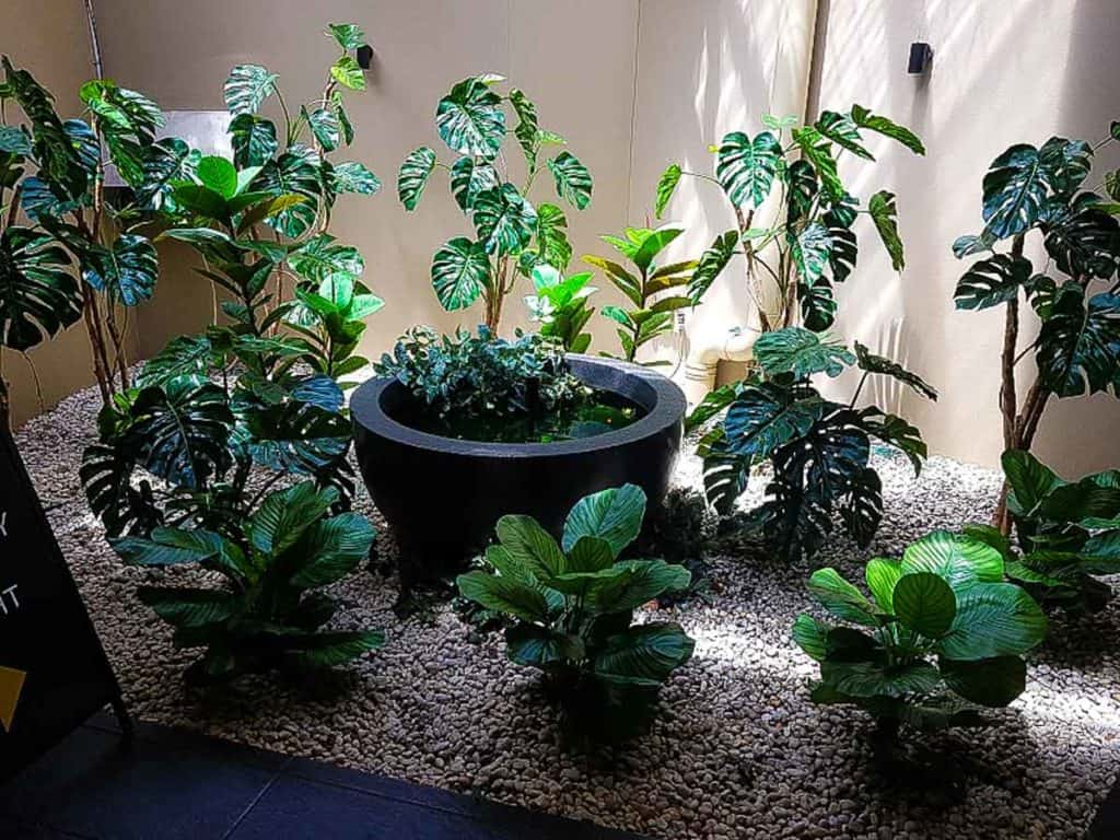 Artificial Plants at Revesby Pacific Hotel