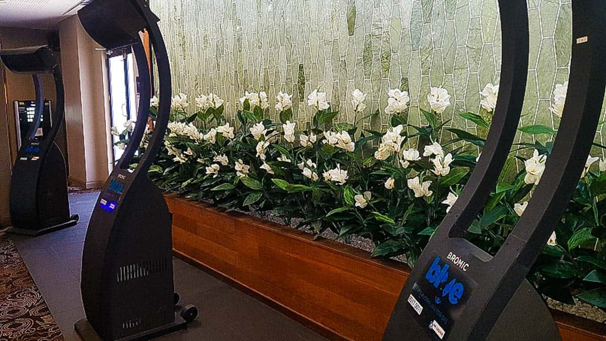 Artificial Plants at St George Hotel