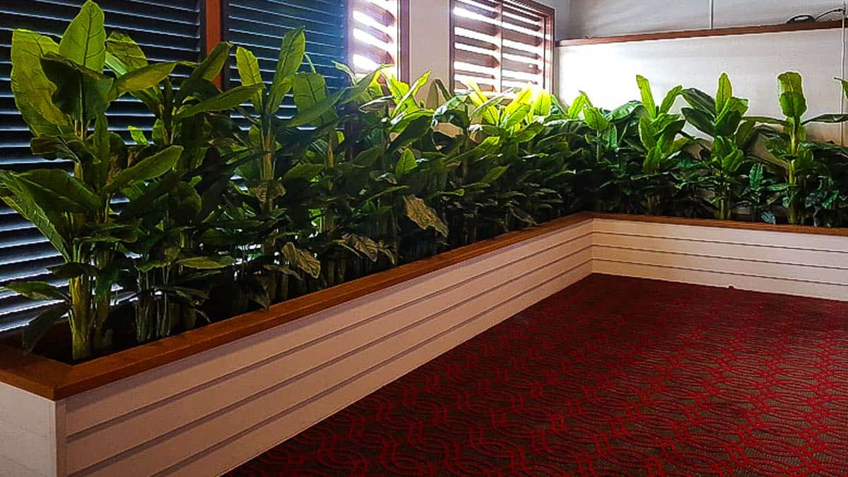 Artificial Plants at Toormina Hotel